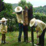 Lehrbienenstand: Aufbau der Schaubeute
