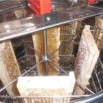 Lehrbienenstand: Honigschleudern